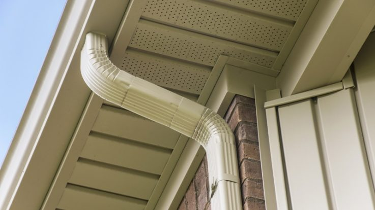 Your Gutters and Pests: What You Need to Know